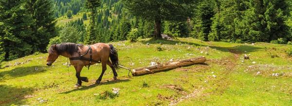 Pferdeintelligenz-fullsize-1100px