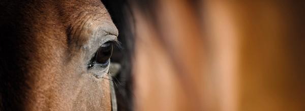 Pferdeaugen-fullsize-1100px
